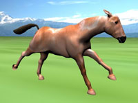 Horse Test