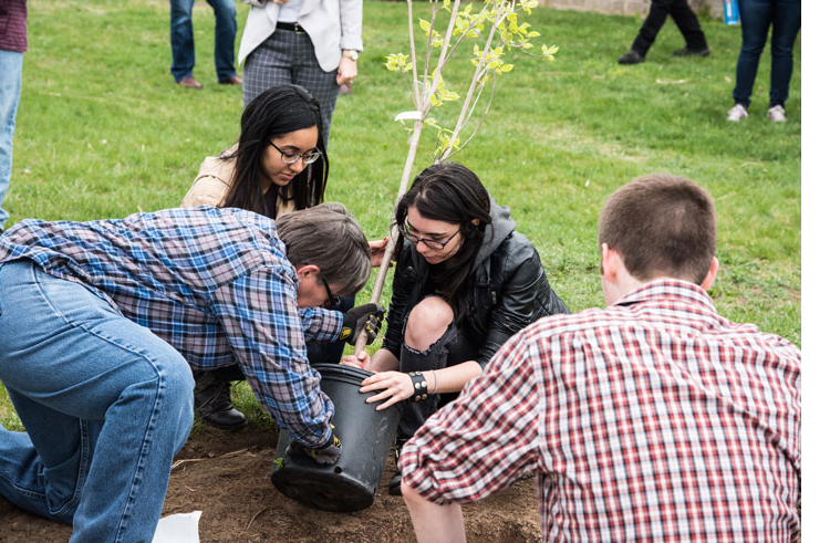 Suffolk County Community College students plant a tree on the college's Michael J. Grant Campus on Earth Day. All three of Suffolk's campuses have been recognized by the Arbor Day Foundation and the New York State Department of Environmental Conservation as 2018 Tree Campus USA members.